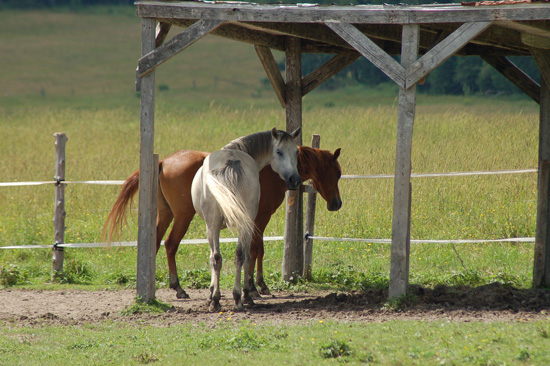 horses of the eastern townships